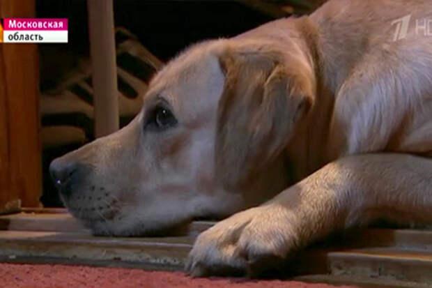 В Кремле назвали чудом возвращение слепой певице собаки-поводыря