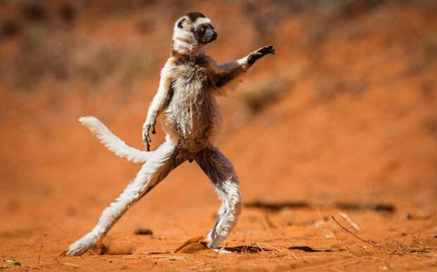 Зверски смешные: самые забавные животные 2015 года