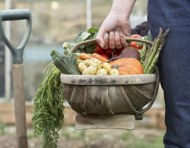 «Органическая» еда против «неорганической»: кто кого