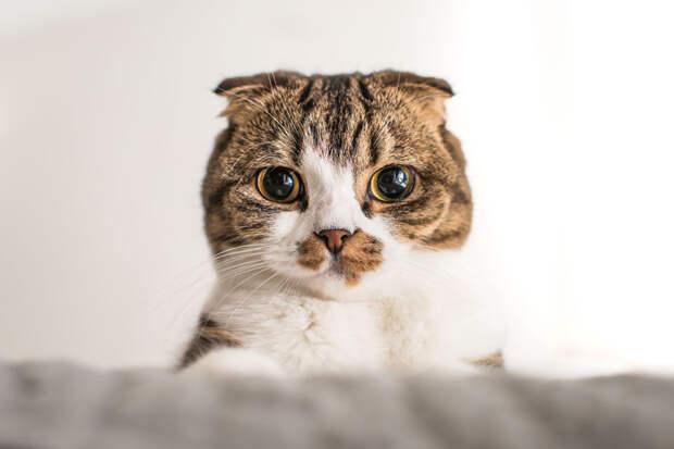 Прикольные картинки для поднятия настроения животные, юмор
