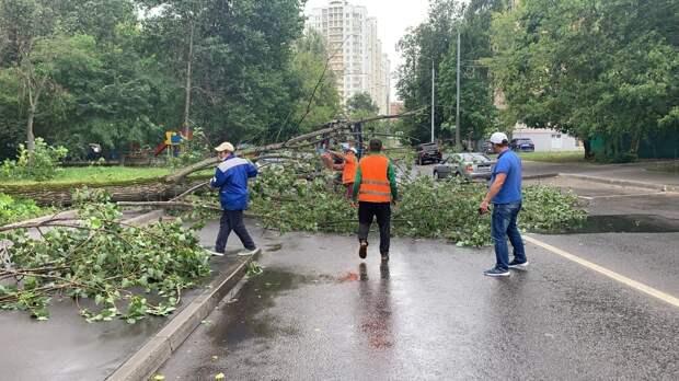 На Большой Марфинской из-за сильного ветра упало дерево