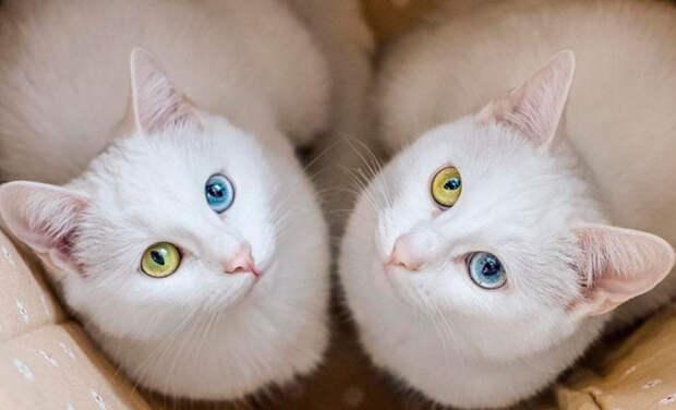 Эти две кошечки-сестрички, стали любимицами пользователей интернета