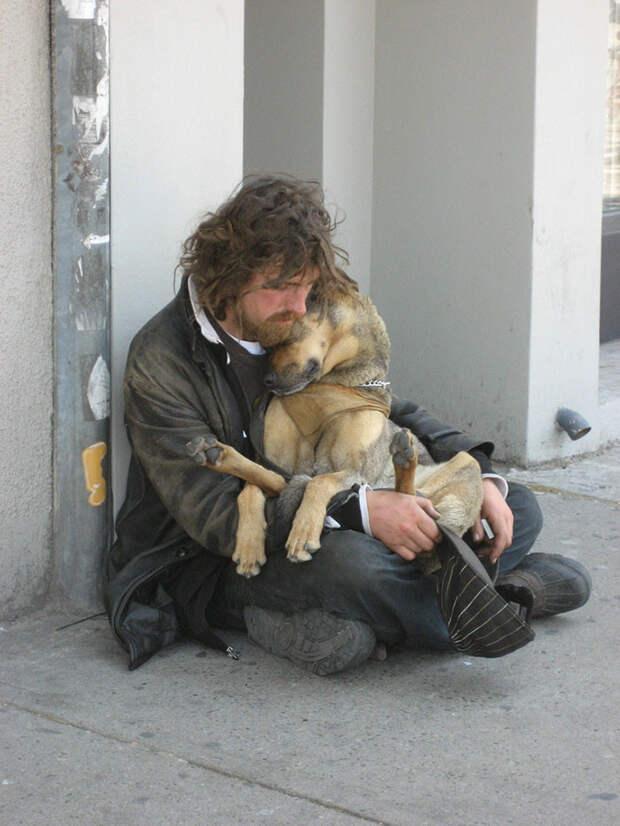 18. Собака, любящая объятия  бездомный, любовь, собака