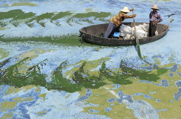 1. Рыбаки на лодке в заросшем ряской озере Чаоху в Хэфэе, провинция Аньхой загрязнение, китай, экология