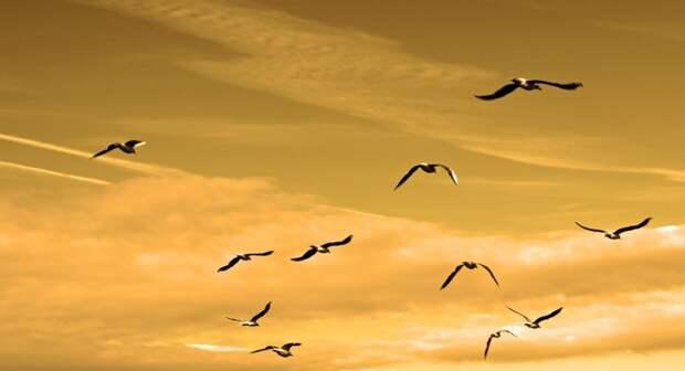 Чайки массово гибнут в Керченском проливе