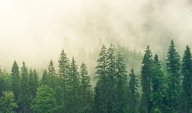 Новым директором Нижнетагильского лесничества стал Ринат Садретдинов