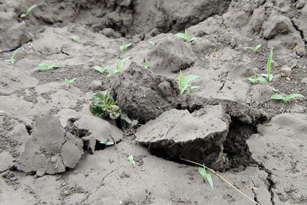 От неудачи к успеху: органические траншеи