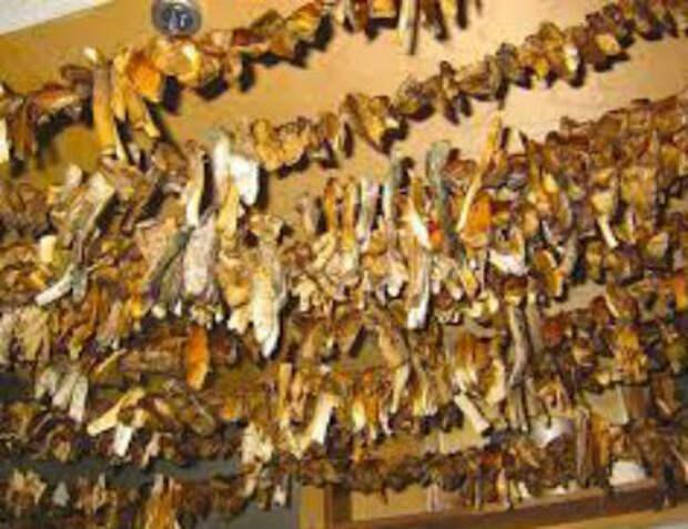 Как сушить грибы в домашних условиях, в духовке, на нитке, в электросушилке