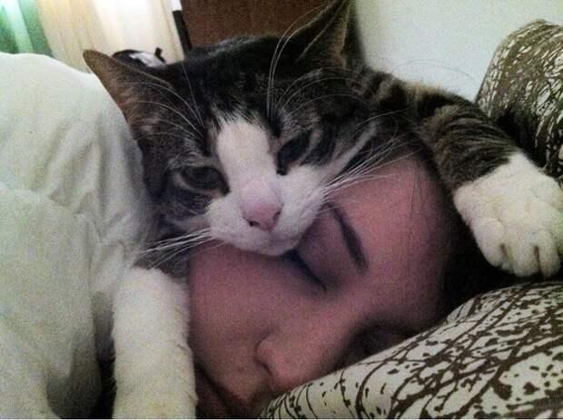 Признаки того, что ваш кот вас очень любит коты, любовь, признаки
