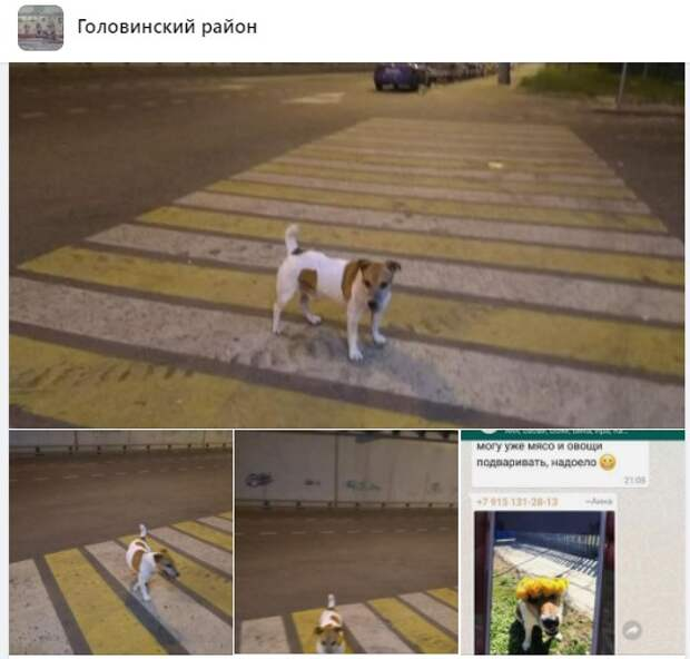 Собака из Ховрина нашлась на Солнечногорской улице