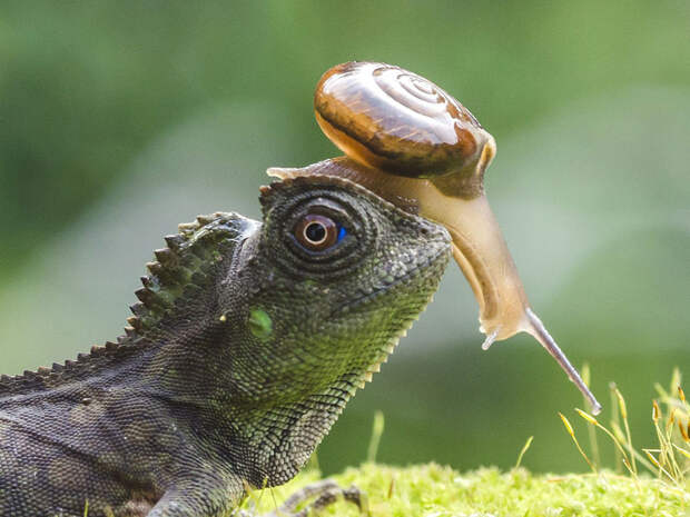 Животные - наездники животные, прикол, фото