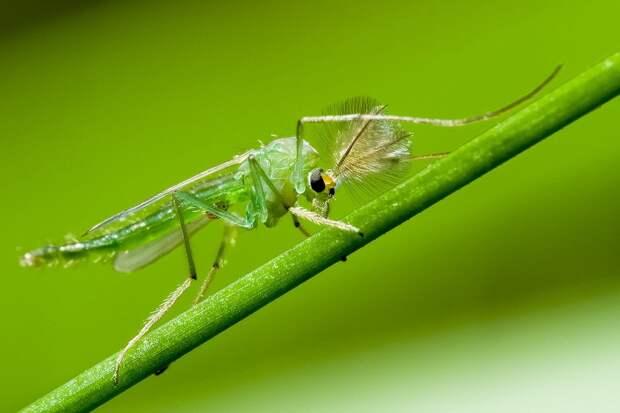 insects46 Портреты насекомых