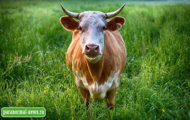 Говорящая корова, гигантские звери и двойник: Причудливые истории от жителя глубинки Канады