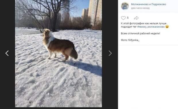Фото дня: собаки в Молжаниновском не рады весне