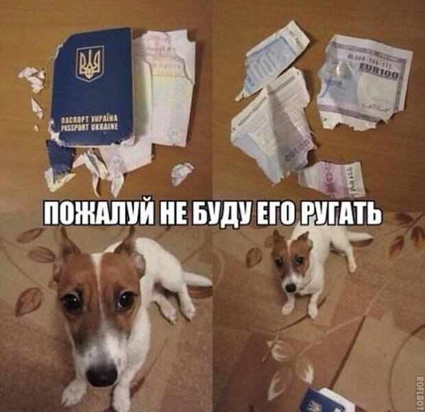О собаках с юмором