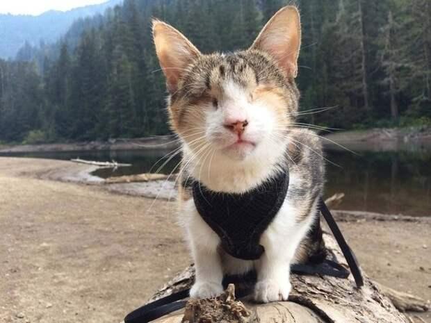 Пчела с хвостом доброта, кошка, слепая
