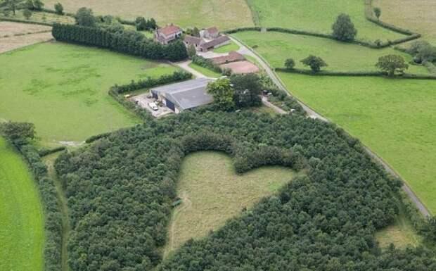 Любящий муж посадил необычный лес в память об умершей жене