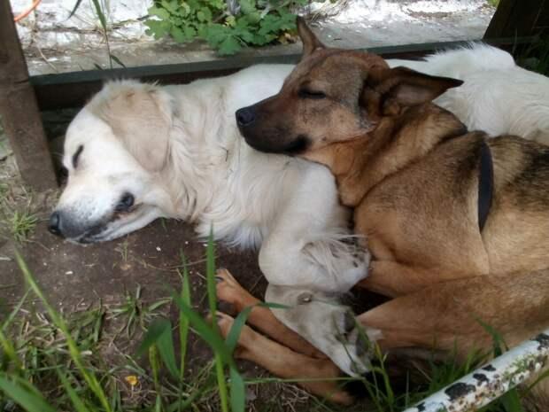собаки отдыхают