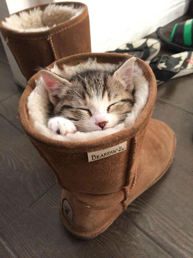 4. Время сна котенок, сон