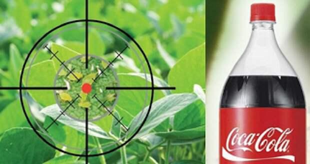 Напои тлю «Кока-колой» до смерти: убойный напиток! Впервые слышу…