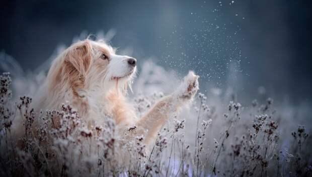 7 лайфхаков, которые позволят вам заснять «душу» любого животного нафото