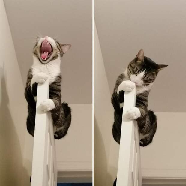 20 странных котиков, которые недают своим хозяевам заскучать