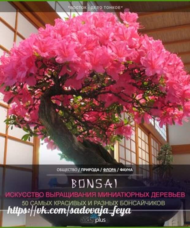 Искусство бонсай.