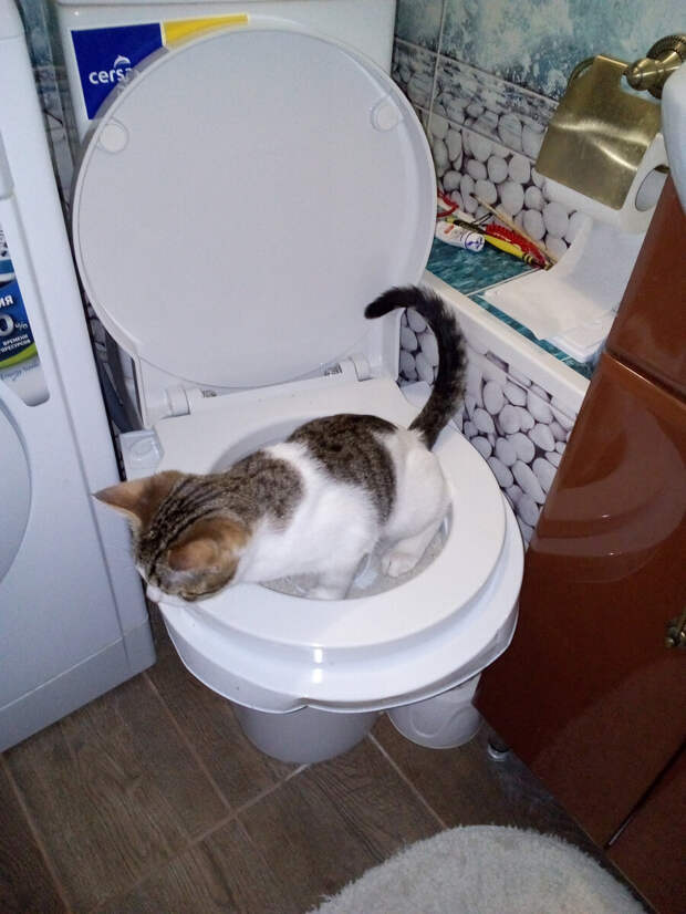 Как приучить кота к унитазу при помощи специальной системы