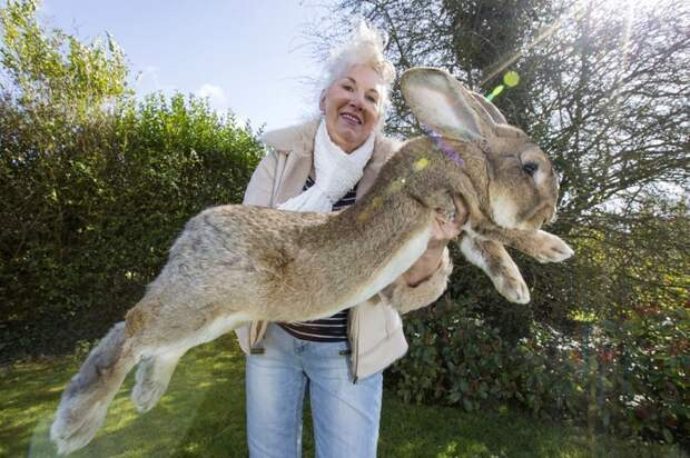 14. Гигантский кролик вид, вымысел, гигант, животные, мир, правда, природа, фото