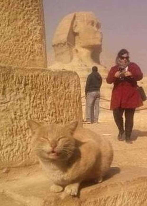 Кот и Сфинкс
