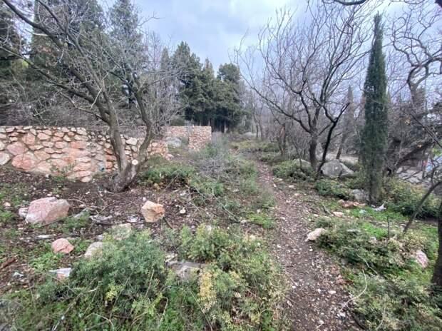 Краснокнижные деревья вырубили в Ялте