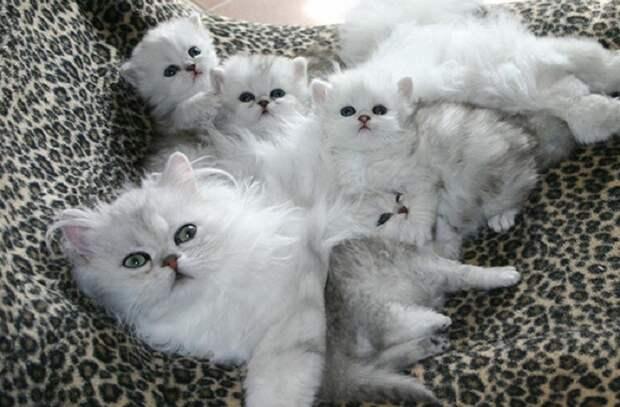 Заботливые и ласковые мамочки-кошки.