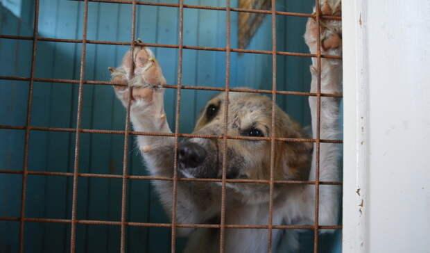Приедутли вВолгоград 1500 бездомных собак из Астрахани?
