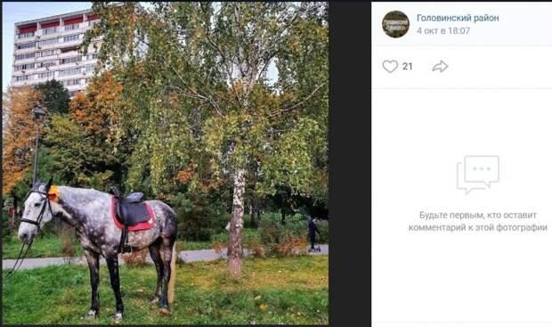 Фото дня: лошадь в яблоках окраса берёзы