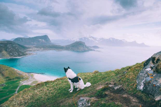 Хаски-путешественник