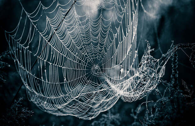 Красивое макрофотографии стрекозы