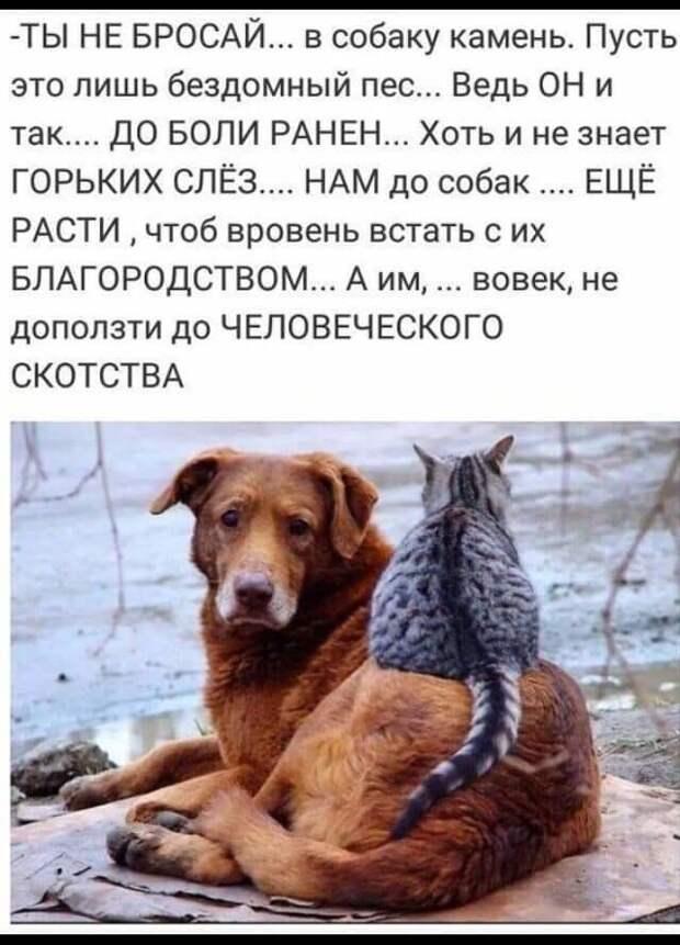 """""""Преданность не зависит от размеров"""": История о крошечной собачке растрогает до слёз"""