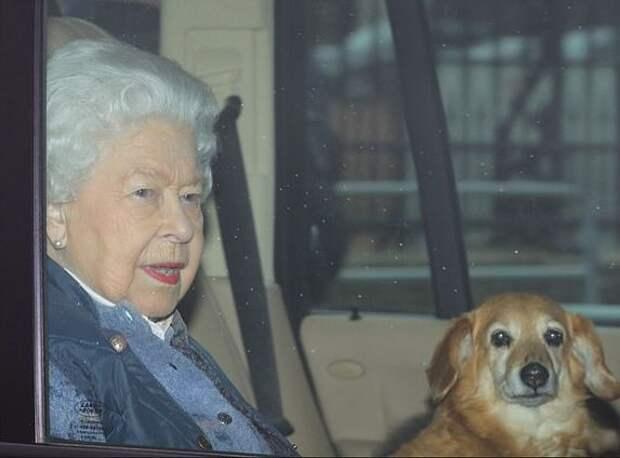 Британская королева купила щенка корги по интернету