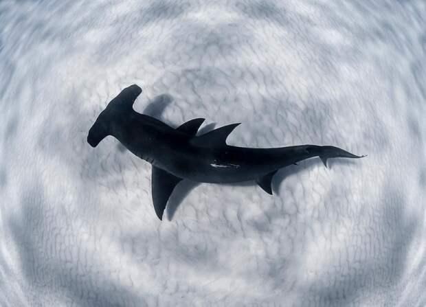 Отличные подводные снимки от Джейсона Вашингтона