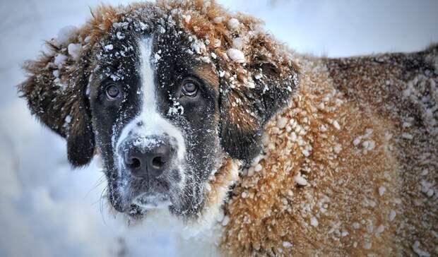 Вмокрый снег может перейти дождь вРостовской области