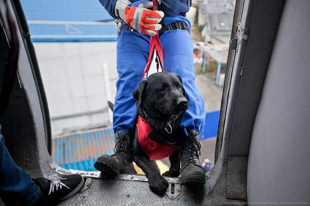 Собаки и учения МЧС