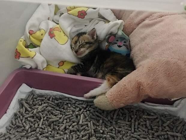 Котенок «плакал», оставшись в одиночестве. И тут на помощь пришла пушистая и теплая подруга