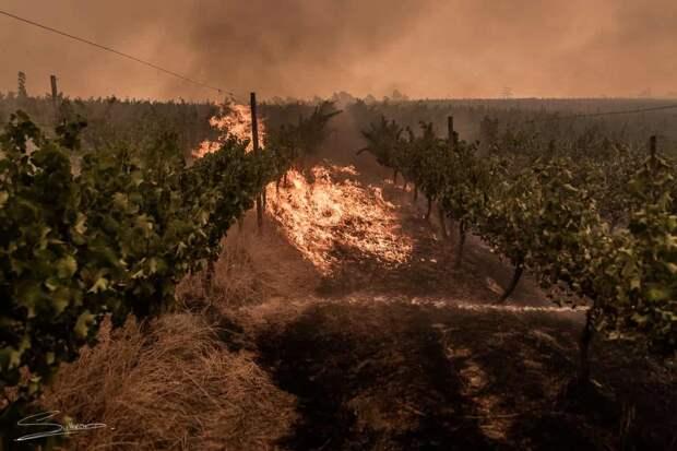 На Украине горят виноградники французских виноделов