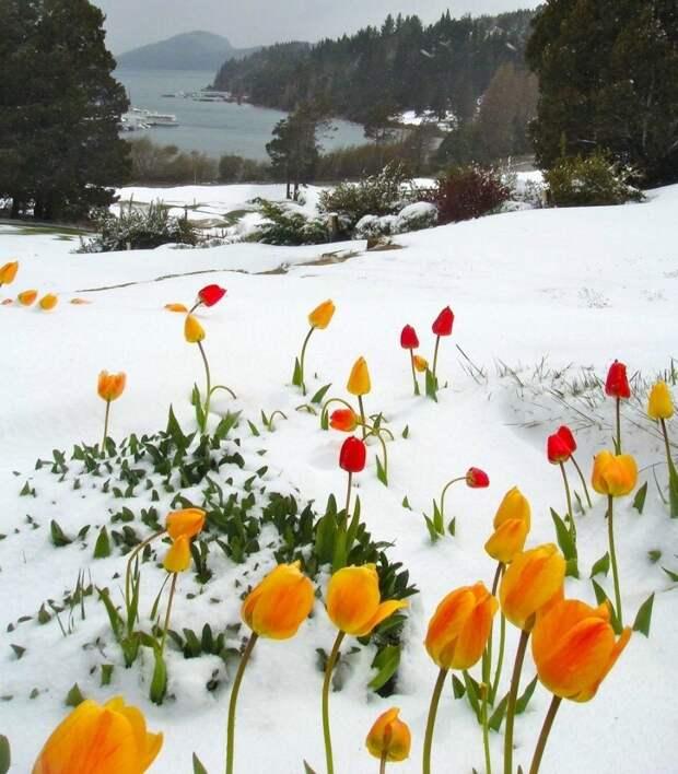"""Картинки, фотографии с надписью и жизненные приколы из сети из рубрики """"Вспоминая зиму"""""""