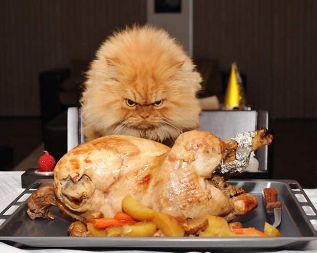 Боевой настрой вкусно, еда, животные