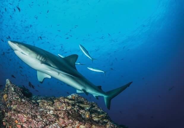 Прекраснейший мир акул в фотографиях