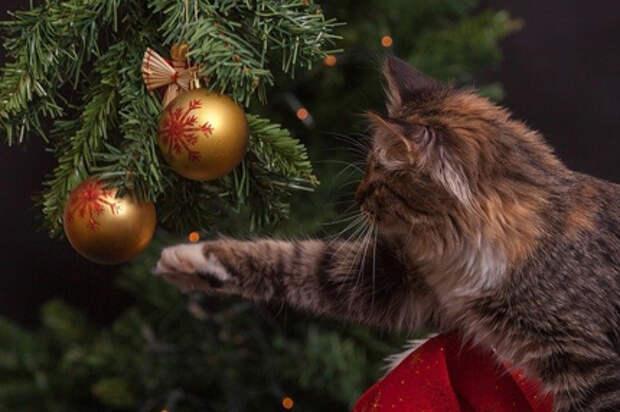 В новогодние каникулы россияне докупали подарки и путешествовали