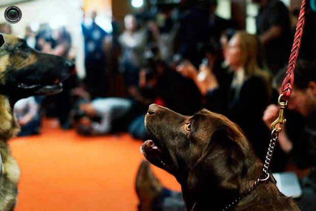 Самые популярные породы собак в США за 2012 год