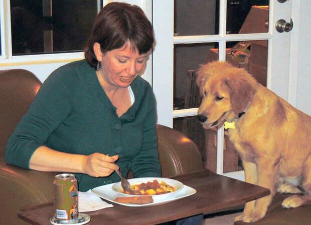А вы знаете, что кусочки со стола только подтверждают главенство хозяина в глазах собаки?