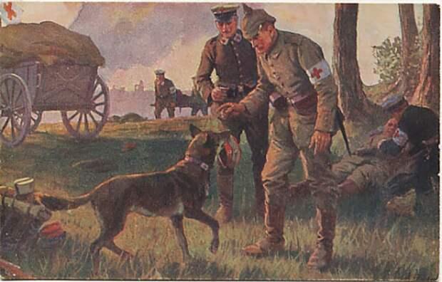 Псы милосердия Первой мировой: Как четвероногие санитары героически спасали людей
